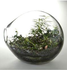 Google Image Result for http://www.remodelista.com/img/sub/paula-hayes-round-terrarium.jpg