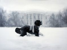 "White House ""Holiday"" Card Spotlights Dog, Not Christmas"