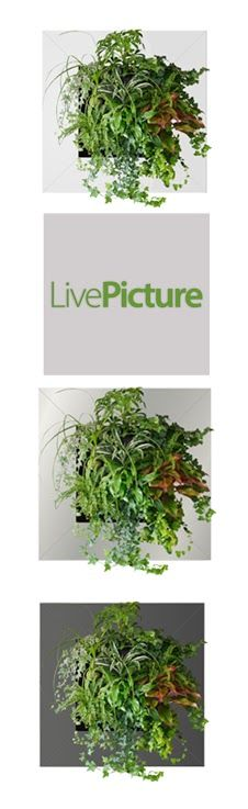 LivePicture is a revolutionary living wall planter system that stimulates the senses by adding a touch of nature's natural beauty.
