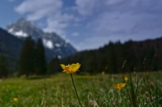 Mittenwald   Flickr - Photo Sharing! Mountains, Nature, Photos, Travel, Naturaleza, Pictures, Viajes, Destinations, Traveling