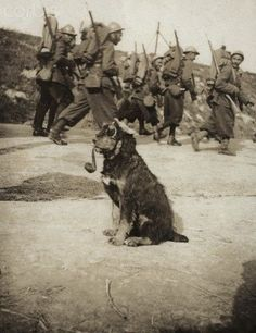 World War I. A dog dressed up as a German soldier (France). In 1915. by georgina