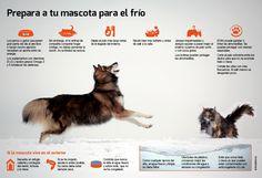 Protege a tu mascota frente al frío