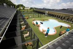 Big beautiful kennel pool.