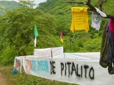 pitalito returned with international support Campaign, Product Launch