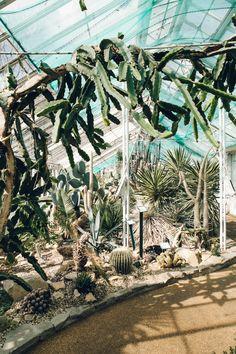 Indoor cacti garden at Birmingham Botanical Gardens.