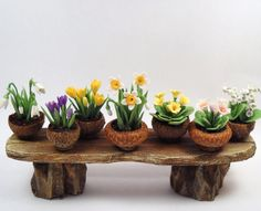 Acorn cap flower pots at cdhm - DIY-Ideen - Mini Fairy Garden, Fairy Garden Houses, Gnome Garden, Fairy Gardening, Garden Cottage, Herb Garden, Fairy Crafts, Garden Crafts, Garden Ideas