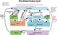 Diagram of carbon cycle sources and sinks cool careers in the global carbon cycle represented in a diagram with reservoirs and arrows connecting them to ccuart Images