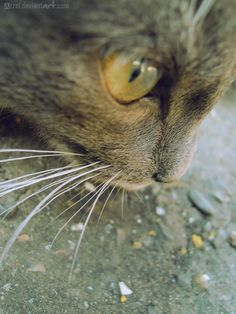 neighbor's cat by Azzai.deviantart.com