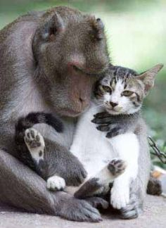 do you think the cat is as interested in this friendship as the macaque?