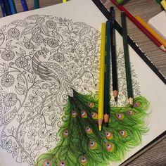 Como lidar com esse pavão da @mariliaef11 ?! ⓜⓐⓡⓐⓥⓘⓛⓗⓞⓢⓞ  ---------------------------------------------------- #⃣ Use #jardimsecretoinspire para que seu colorido seja compartilhado aqui no nosso perfil!! ➡️ Envie por Direct também as suas fotos!! #jardimsecretoinspire #jardimsecreto #livrojardimsecreto #secretgarden #amamosjardimsecreto #inspiração #colorir #cores #colors #johannabasford #antiestresse #diversão #florestaencantada #encontrocomfatima #lapisdecor #gizdecera #terapia…