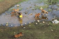 tutti i cani in acqua