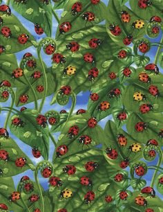 Novelty Fabric By-The-Yard: Ladybugs on Leaves; Cotton yardage at TCSFabrics.   New from Timeless Treasures and 'sew' much fun!  Ladybugs on Leaves with a sky background.  Just in time for summer!  #C3513 #Fabric #LadybugFabric #TimelessTreasures #FabricForSale #Yardage #ByTheYard #CottonFabric #QuiltingFabric #Sewing