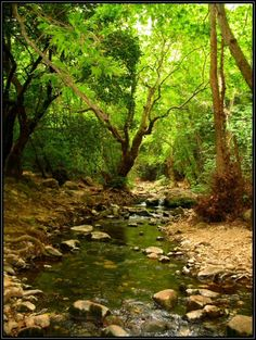 creek~ love walking beside rippling water in deep woods where the silence seems to read your thoughts