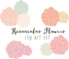 Ranunculus Clip Art vector and png  floral by Thelittleclouddd