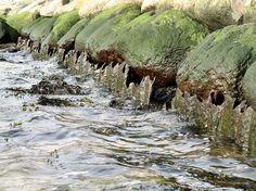 Steine und Rost im Wasser