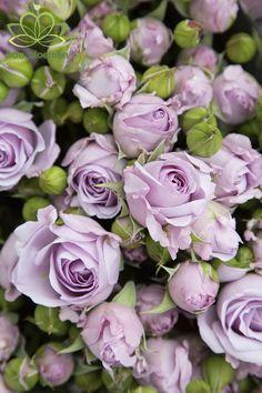Lilac Flowers, Types Of Flowers, Flowers Nature, Pretty Flowers, Red Roses, Rose Flower Wallpaper, Rose Varieties, Rose Arrangements, No Rain