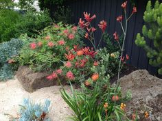 Although it takes just as much time and patience to put in a native garden as a garden full of cultivated ornamentals, the maintenance required is significantly less. Australian garden Making An Outdoor Native Garden Rockery Garden, Bush Garden, Dry Garden, Cottage Garden Plants, Garden Landscaping, Fruit Garden, Landscaping Ideas, Xeriscaping, Garden Edging