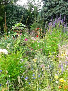 The wild garden: late summer