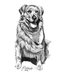 "Duke the #GoldenRetriever portrait, 5x7"" portraits for $80. Visit http://www.gensart.net to have a piece done of your pet!"