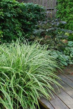 Sarah's Garden, Shade Garden, Plant Design, Garden Design, Growing Greens, Ornamental Grasses, Landscaping Plants, Nature