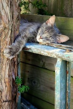 Country Blue with sleeping cat