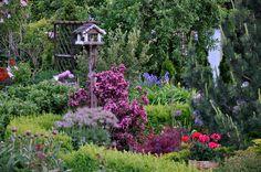 Garden 05/15