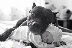 Evitar ciúmes entre crianças e cachorros. Na altura da gravidez, surgem perguntas de todo o tipo que incluem, nesse caso, o seu cachorro, uma vez que não sabe como o pet vai reagir à chegada do bebê ou o que...