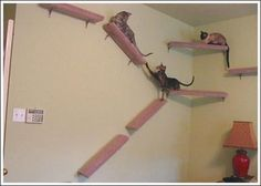Thinkin' about putting these really awesome wall-stairs in my house for my 3 cats