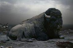 Revered Buffalo.