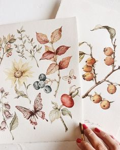 Watercolor Flowers, Berries, Butterflies, and Leaves Watercolor Illustration, Watercolour Painting, Watercolor Flowers, Painting & Drawing, Art Flowers, Watercolors, Wild Flowers, Botanical Drawings, Botanical Art