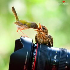 Photograph Canon #2 by Duy Thong Vu on 500px