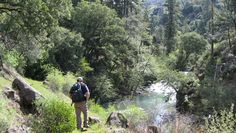 Learn about the proposed Forest Planning Rule.