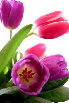 tulips by mellow_stuff, via Flickr