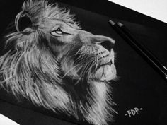Lion sketch on black with white charcoal   #sketch #art #artwork