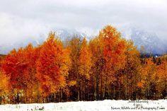 Fall Meets Winter - Grand Teton NP