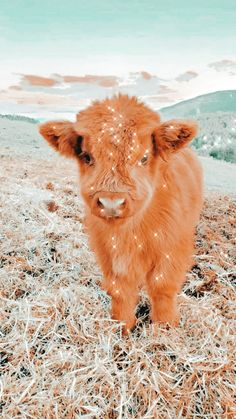 Cute Baby Cow, Baby Animals Super Cute, Cute Wild Animals, Cute Cows, Cute Little Animals, Cute Funny Animals, Animals Beautiful, Baby Farm Animals, Baby Animals Pictures
