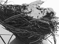 Black and White Fine Art Photograph; Birds Nest; Abstract Photography; Dimensions: 8 x 10; leekleinfineart