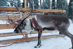Lapland Holidays: Top 8 Things To Do In Rovaniemi, Finland