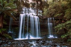 Mt Field National Park Active Day Trip from Hobart Including Bonorong Wildlife Sanctuary and Mt Wellington in Australia Pacific Ocean and Australia Australia Tours, Hobart Australia, Large Water Bottle, Bruny Island, Wildlife Park, Tasmania, Day Tours, Hiking Trails, Day Trip