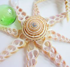 Beach Decor Star Shell Christmas Ornament - Nautical Decor Seashell Ornament. $15.00, via Etsy.