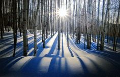 "Limited Edition Print ""Sunlit Birches"" by Peter Lik"