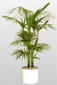 33 Best Hotel Plants Ideas Hotel Plants Plant Decor Plants
