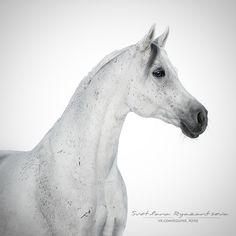 Blue Ocean 2011 Álbum en blanco-horseland