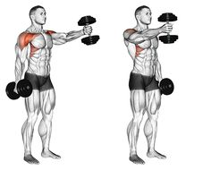 Exercise Database - Standing Alternate Vertical Dumbbell Front Raises — Jase Stuart - The Better Body Coach Fitness Workouts, Gym Workout Tips, Dumbbell Workout, Workout Challenge, Workout Videos, Fun Workouts, At Home Workouts, Shoulder Workout, Dumbbell Shoulder