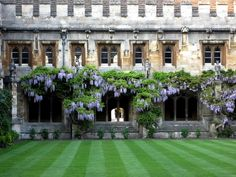 Ewa in the Garden: 33 Amazing Pictures Hand Picked - Vine Wisteria or Wisteria Tree? - Inspirational Monday