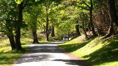 Walking through the glade