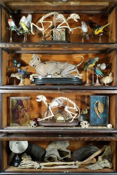 Cabinet of Cats, Birds, & Assorted Other Specimens. Ryan Matthew's Private Collection. Photo by Sergio Royzen.