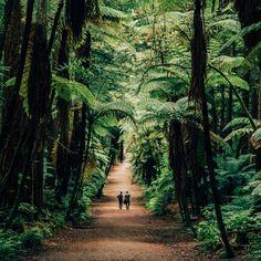 2 week self drive roadtrip itinerary around New Zealand: Rotorua Redwood Forest