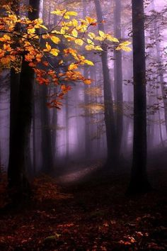 Golden tree stands in the misty forest Beautiful World, Beautiful Images, Beautiful Forest, Beautiful Moments, Misty Forest, Dark Forest, Foggy Forest, Autumn Forest, Tree Forest