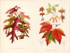 25 Free Natural History Images for Fall